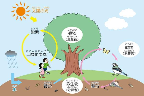生態系のしくみ|浦安市公式サイ...
